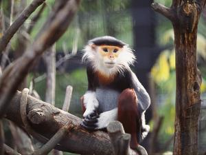 Monkey by WizData
