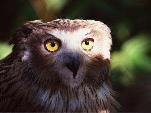 Owl by WizData