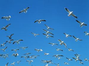 Seagulls by WizData