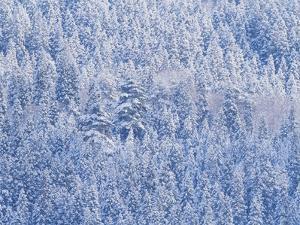 Snowy Mountain by WizData