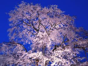 Tree by WizData