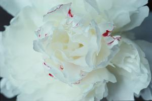 White Flower by WizData