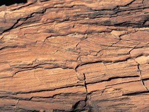 Wood Image by WizData