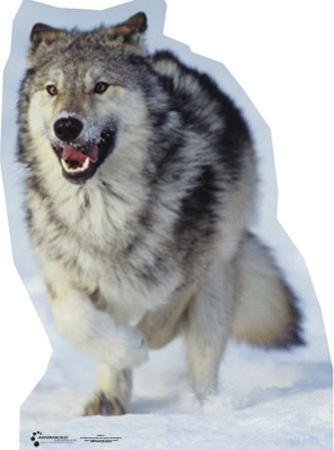 Wolf Lifesize Standup
