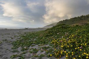 California Coast by wollertz