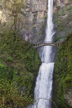 Multnomah Falls, Oregon by wollertz