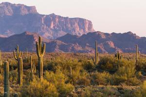 Saguaro Cactus by wollertz