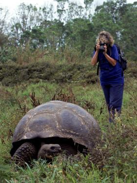 Woman and Giant Tortoise, Galapagos Island, Ecuador