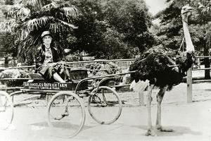 Woman Driving an Ostrich Carriage at the Ostrich Farm, Los Angeles, California, c.1920