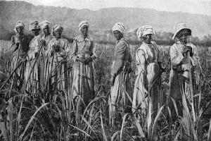 Women Tending Young Sugar Canes in Jamaica, 1922