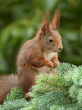 Animal Squirrel Nature by Wonderful Dream
