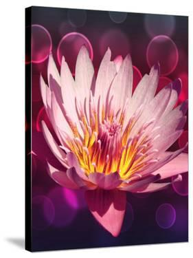 Asia Lotus Flower With Bokeh Art by Wonderful Dream