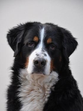 Cute Dog Pet Animal by Wonderful Dream