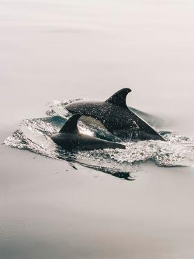 Family Dolphin Sealife by Wonderful Dream