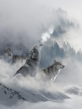 Fantasy Wolf by Wonderful Dream