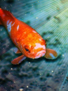 Fish Sealife With Stars by Wonderful Dream