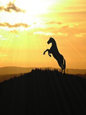 Horse Animal Farm Sunset by Wonderful Dream