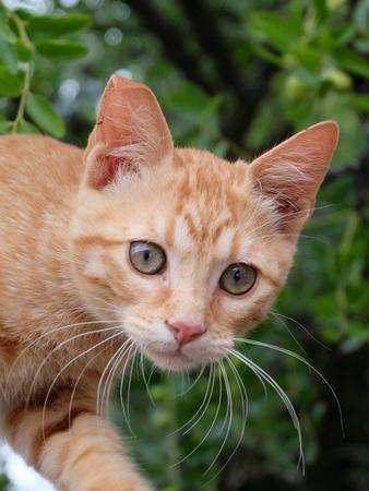 Lovely Red Cat Animal