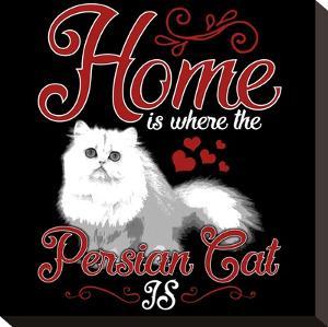 Persian Cat Pet by Wonderful Dream