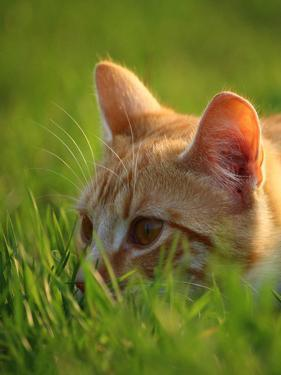 Red Cute Cat In The Nature by Wonderful Dream