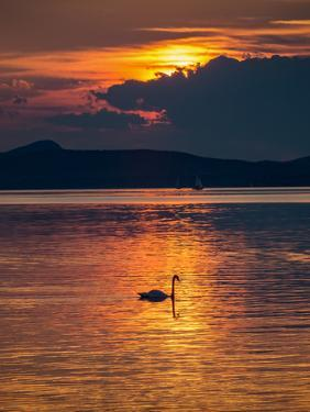 Sunset With Swan by Wonderful Dream