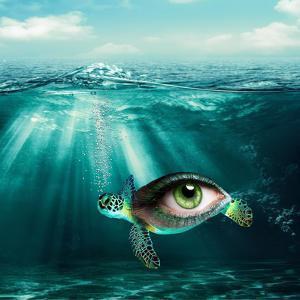 Turtle Eye by Wonderful Dream