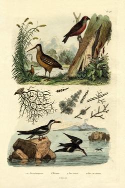Woodcock, 1833-39