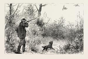 Woodcock Shooting, 1884