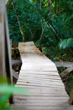 Wooden Bridge over River in Jungle Photo Poster Print