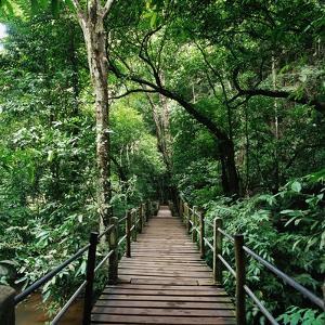 Wooden Bridge Thailand