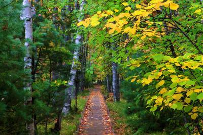 https://imgc.allpostersimages.com/img/posters/wooden-walking-trail-in-acadia-national-park-maine-usa_u-L-PXR9Y30.jpg?artPerspective=n
