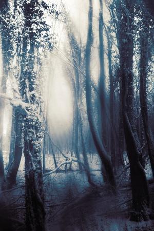 https://imgc.allpostersimages.com/img/posters/woodland-in-winter_u-L-PZ0R710.jpg?p=0
