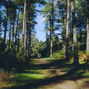 Woodland Walk, Sherwood Forest, Edwinstowe, Nottinghamshire, England by L Bond