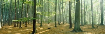 Woodlands Near Annweiler Germany