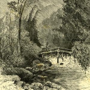 Woods Austria 1891