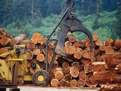 Logged Trees Being Moved at Wood Mill on Border of Redwood National Park, USA