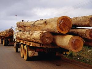 Logging Trucks on Road, Bolaven Plateau, Laos by Woods Wheatcroft