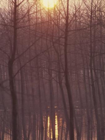 Bare Trees Silhouetted by Winter Sunset, and Reflected in Pond