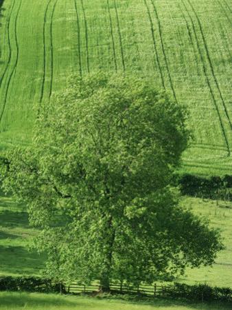 Clun Valley, Shropshire, England, United Kingdom, Europe