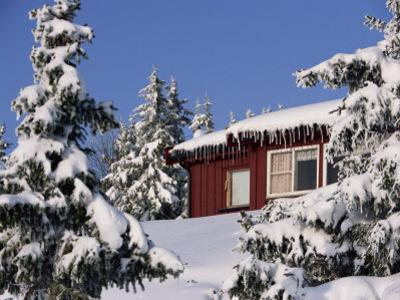 Snow Covered Trees and House, with Icicles, Near Sjusjoen, Lillehammer Area, Norway, Scandinavia
