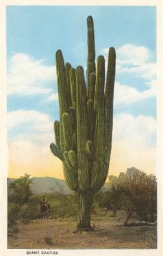 World's Largest Saguaro Cactus