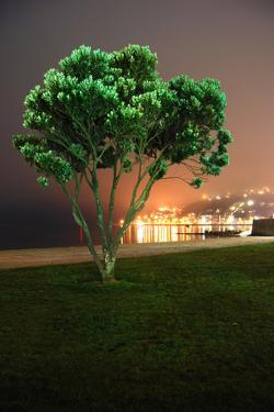 Orientalbaytree by www.ronbergcreative.com