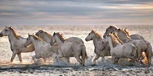 Running Horses by Xavier Ortega