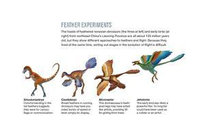 Feathers of Nonavian Dinosaurs and Early Birds by Xing Lida