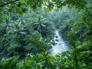 Ayung River Bends Through the Lush Dense Tropical Jungle by xPacifica
