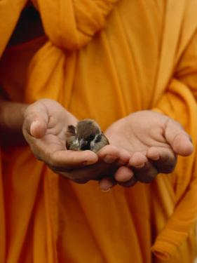 Buddhist Monk in a Saffron Robe Holding a Baby Bird in His Hands by xPacifica
