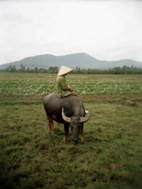 Farmer Sitting on His Water Buffalo in a Farm in Vietnam by xPacifica