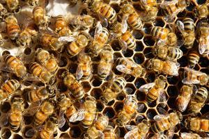 Beekeeping at Vietnam, Beehive, Bee Honey by xuanhuongho