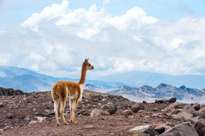 Andes of Central Ecuador by xura