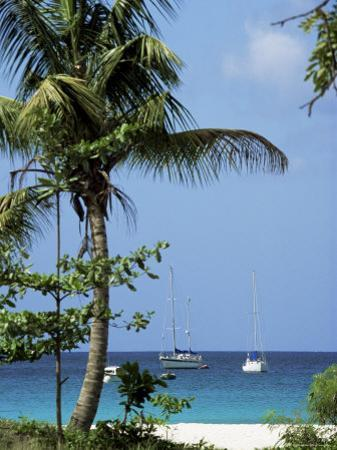Yachts and Palms, Barbados, West Indies, Caribbean, Central America